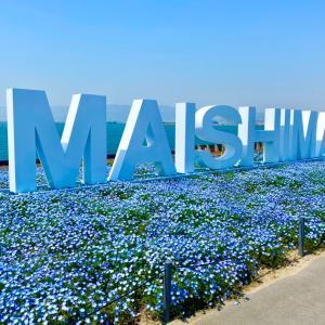 大阪 まいしまシーサイドパーク ネモフィラ祭り