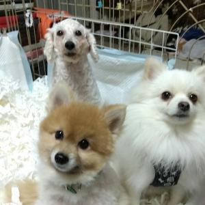 繋がってる!『犬の唄』生配信ライブ開催中!