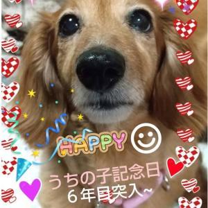 【卒業犬の時間旅行】ほのかちゃん☆『エママの愛しくって仕方ありませんのコーナー』より