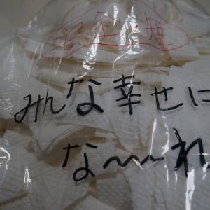 【ぼく、幸せになります】秋田系雑種・とも2君、たくさんのチギチギありがとう