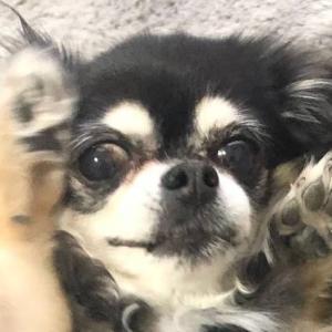 【明日25日は保護犬の会】横浜市南区・南太田駅すぐ