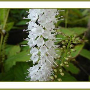 (令和2年10月23日)霜柱霜降なれど花なれど♪