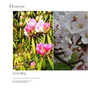 花ある季節