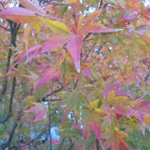 今週末は紅葉が見頃!!