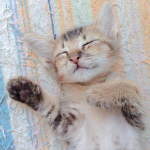 猫ちゃんはどんな時も癒してくれます