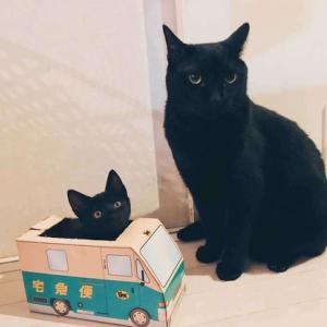 黒猫ヤマト
