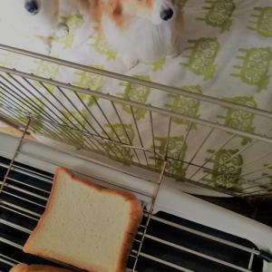 トーストの番犬