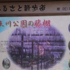 愛知県天王川公園 東洋一の藤棚 バス日帰りツアー