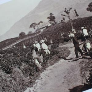 麗香茶課「インド紅茶の歴史と今 ~アッサムとダージリン~」