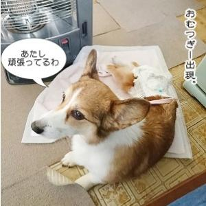 *COCOのコト。*