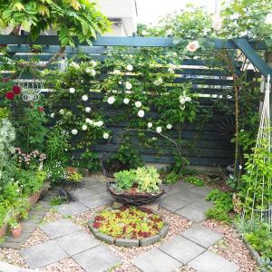 薔薇が咲き始めた6月の庭