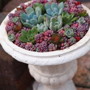 華やかなパープルヘイズの寄せ植え