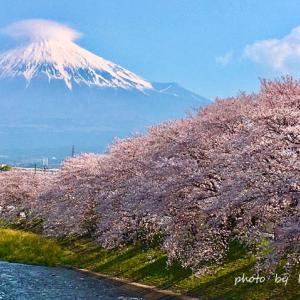 龍巌淵の桜~2020♪