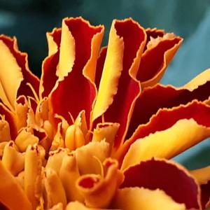 可愛い庭の花たち