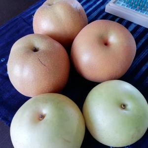 梨の季節なっしー