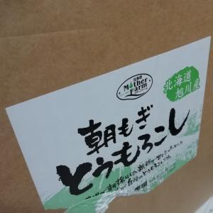 北海道のトウキビは、やっぱ格別
