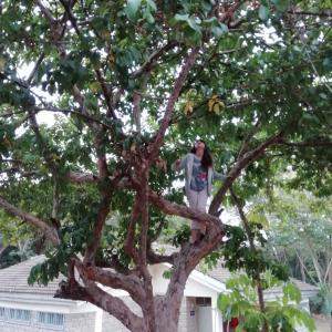 朝から木登りをするJK