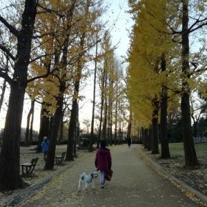 夕方の羽根木公園
