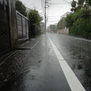 雨の中でブルーベリー摘み