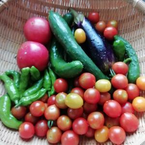 夏野菜がピーク
