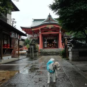 雨の菅原神社と彼岸花