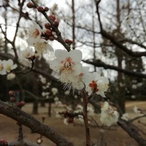 寒空の下の花たち