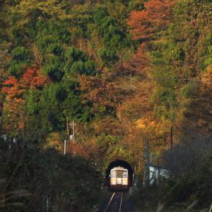 鳥取&片上参り(11月)