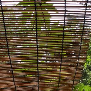 我が家の夏の風物詩⭐︎簾と打ち水と緑のカーテン