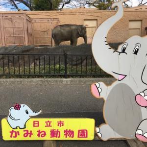 日立市かみね動物園の新日本猿舎