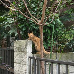 ネコの通り道