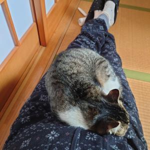 くるみちゃん、膝でお昼寝