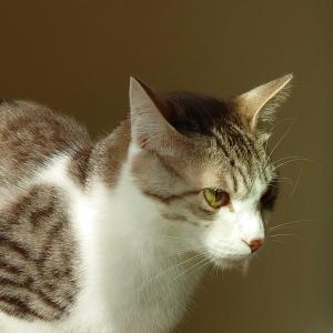 慌てるイケメン猫/つばめさん