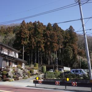 森が煙っていなかった、、、(コロナウィルスの岩田先生の言葉を発見!)