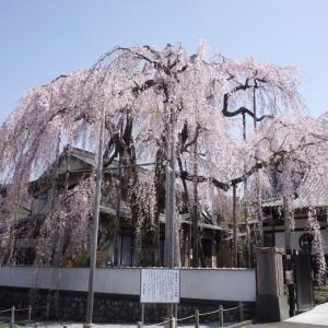 この桜を見た時、、、