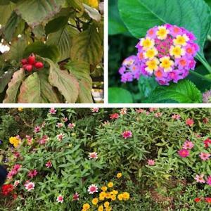 花壇の花とラグビー熱い一日