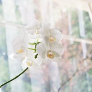 花とこれから