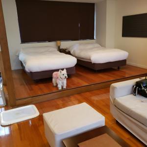 お誕生日旅行に行って来ました③レジーナ富士suites&spa