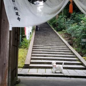 松尾寺さんのカサブランカ♪♪♪