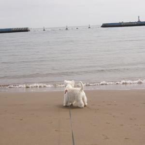 海岸お散歩&手打ち十割蕎麦蕎仙(きょうせん)♪♪♪