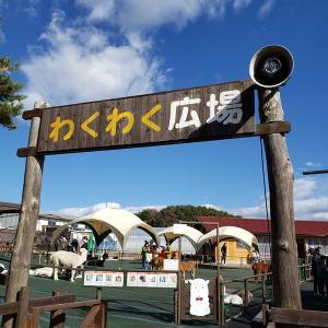 八ヶ岳アルパカ牧場&まきば公園♪♪♪♪