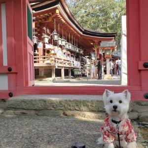石上神宮さんへ初詣♪♪♪♪