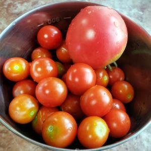 ★お庭のミニトマト★