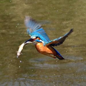 3日間の撮影で給餌6回と交尾1回が撮れました、巣ごもり直前の不動池つがい の巻