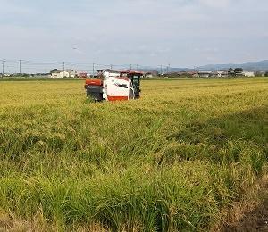 稲刈り日和。