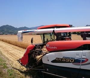 麦刈り1日目。