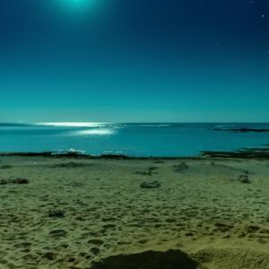 月と星とウミガメ