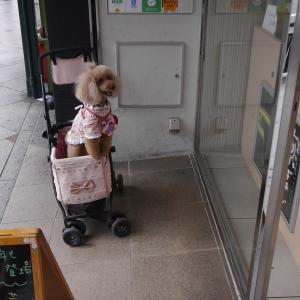 愛犬とのおでかけ2019年10月旅行4-食べ歩き&八坂神社&御金神社♪-