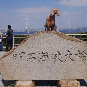 愛犬とのおでかけ2019年10月旅行8-久しぶりの橋を渡ったよ♪-