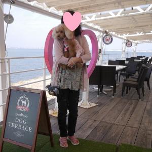 愛犬とのおでかけ2019年10月旅行9-オーシャンビューレストランでランチ♪-