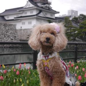 富山城をバッグにね~♪